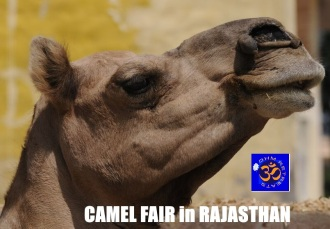 camelfairlink